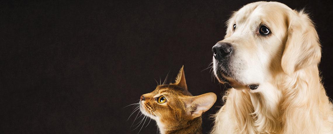 Protégez votre animal