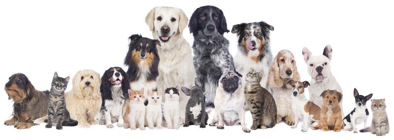 Chiens et chats de différentes sortes